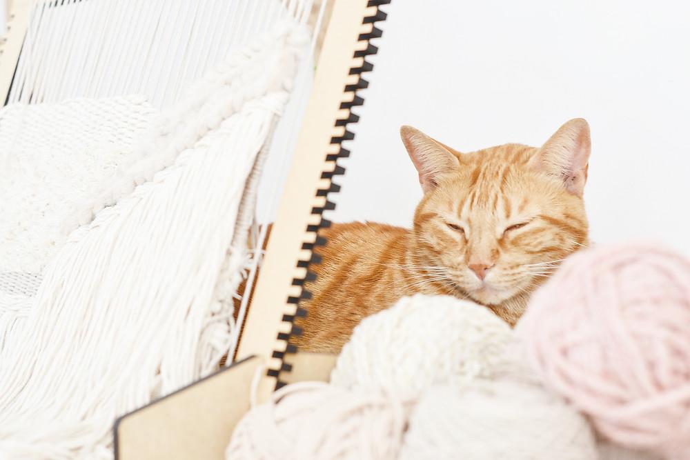 Telar en proceso con gato y lanas