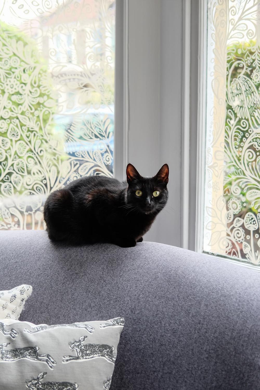 Ventana pintada gato negro en sillón