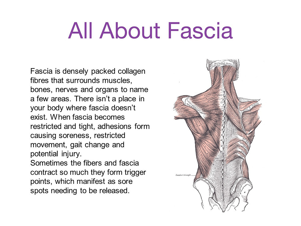 All about fascia