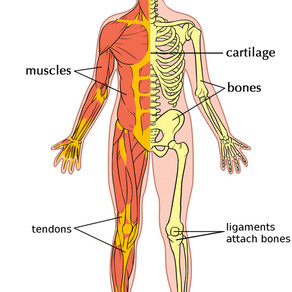 How sports therapy can help with EDS and other musculoskeletal disorders