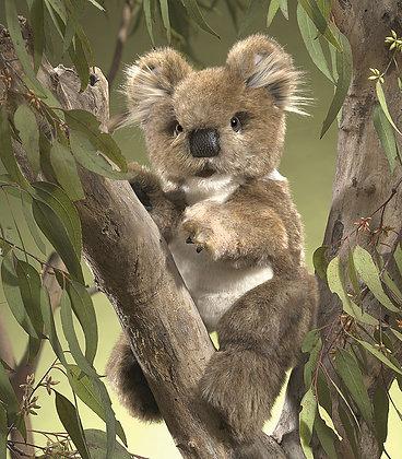 FM3057 - Koala