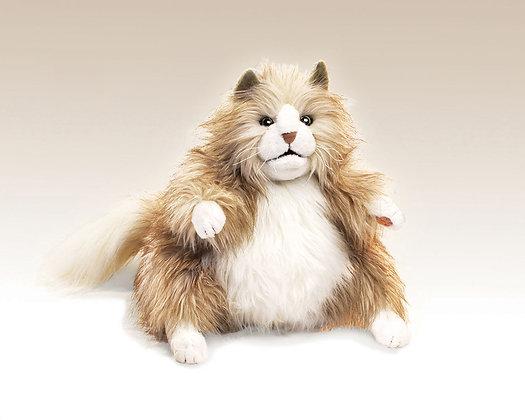 FM2566 - Fluffy Cat