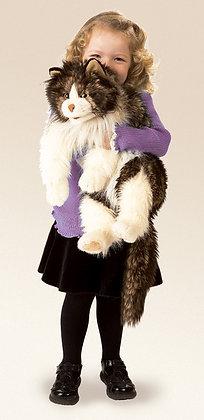 FM2558 - Ragdoll Cat