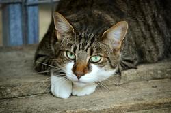 cats-eyes-2671903_1920