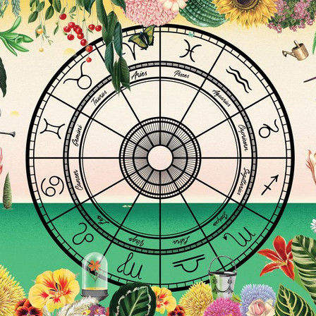 Astrology & Herbs: What to grow based on your Star Sign