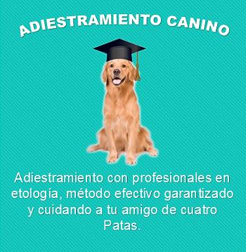 Adestramiento canino