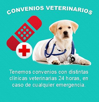 Convenios veterinarios