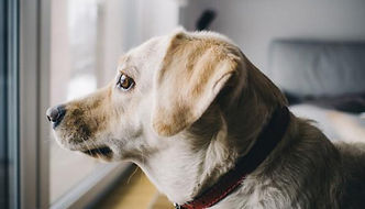 dejar-al-perro-solo-en-casa-690x395.jpg