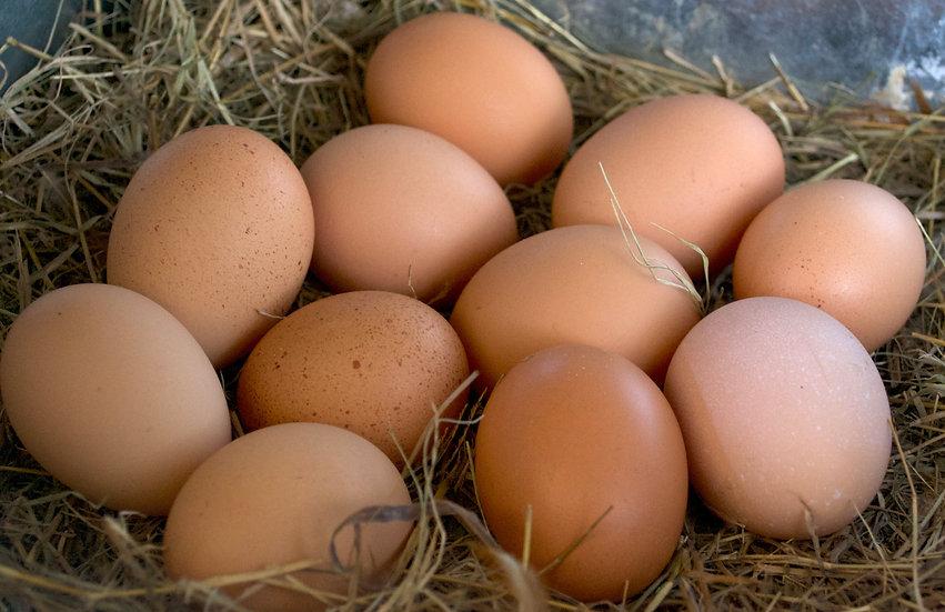 Free Range Eggs (12)