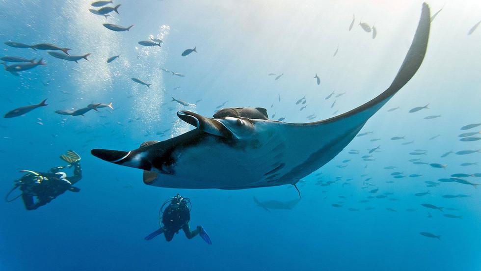 manta-ray-and-divers.jpg