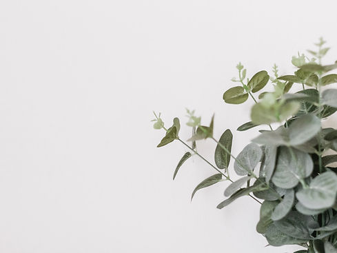Dusty green eucalyptus branches, which represent growth and potential.