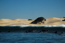 Did you know that Port Elizabeth is the Bottlenose Dolphin capital of the world? Photos taken by Jamie @ Raggy Charters in our beautiful bay