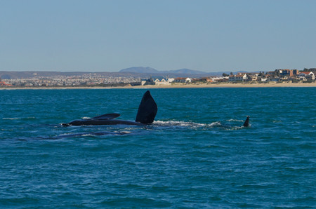 Photos taken by Jamie @ Raggy Charters in our beautiful bay