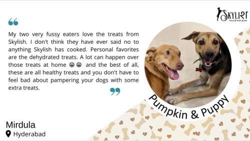 Pumpkin & puppy