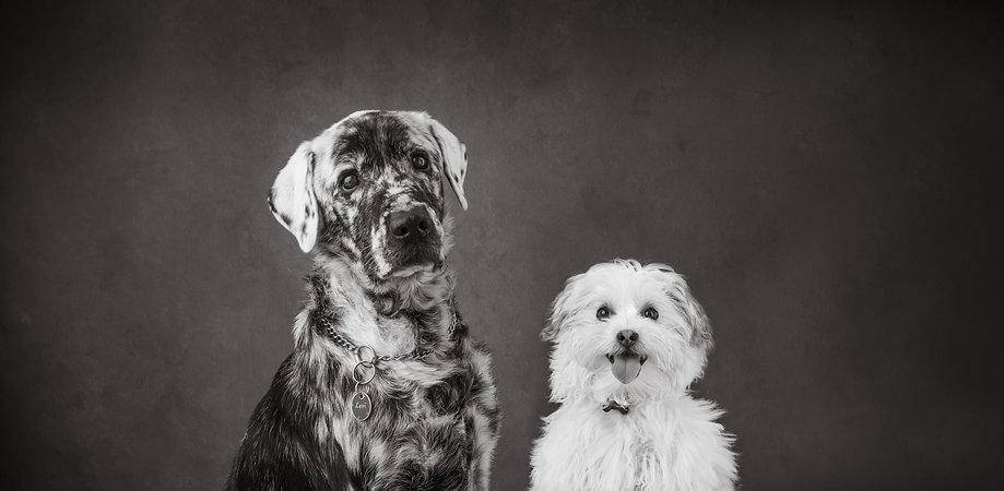 Levi & Barney-38.jpg