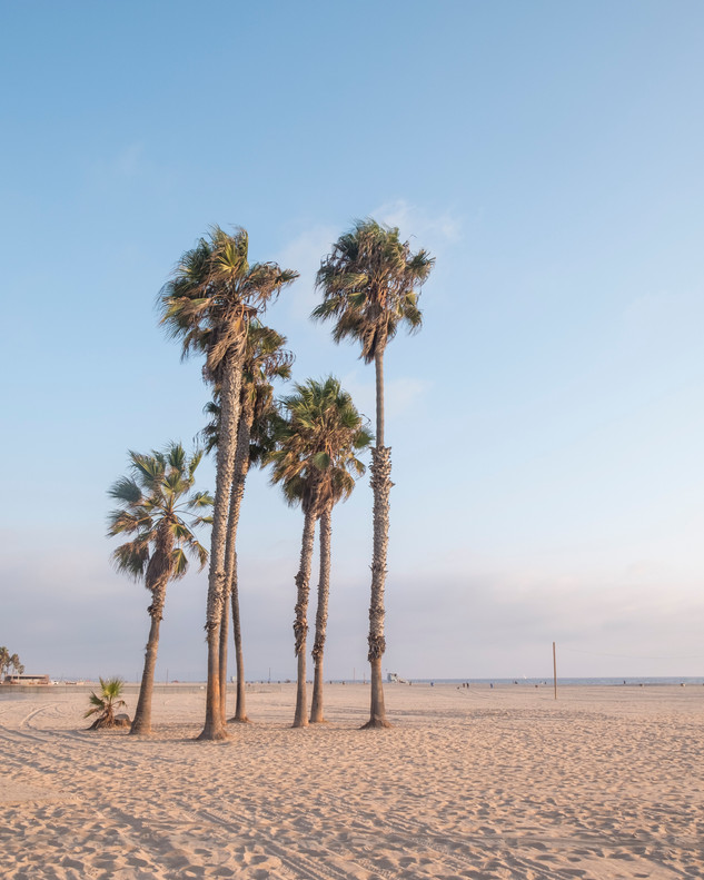 Venice Palms
