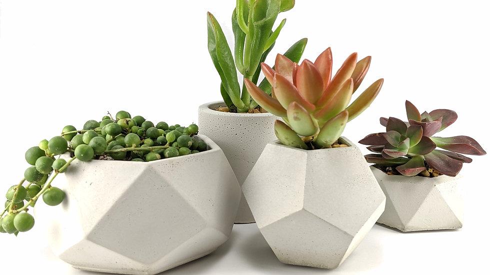Hexagon Concrete Succulent Planter Set