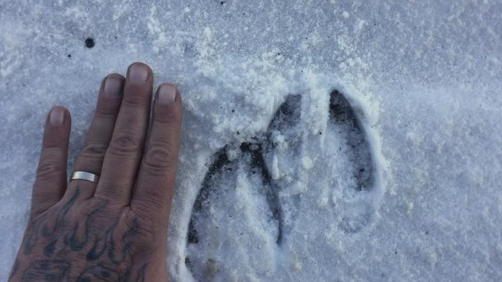 Snowshoes & Animal Tracks for 2