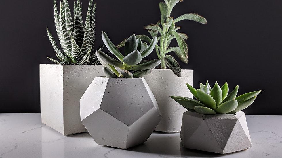 Concrete Succulent Planter set of 4