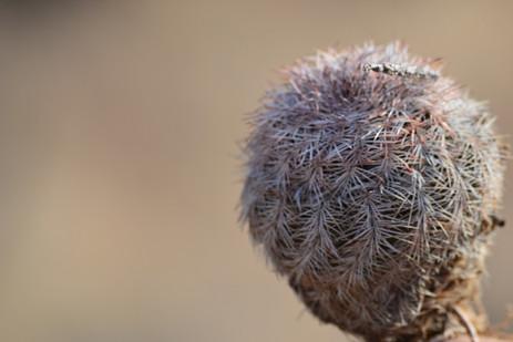 Baby cactus.JPG