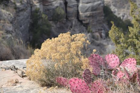 Cactus in winter.JPG