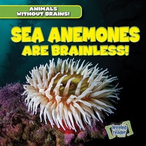 Sea anemones are brainless!