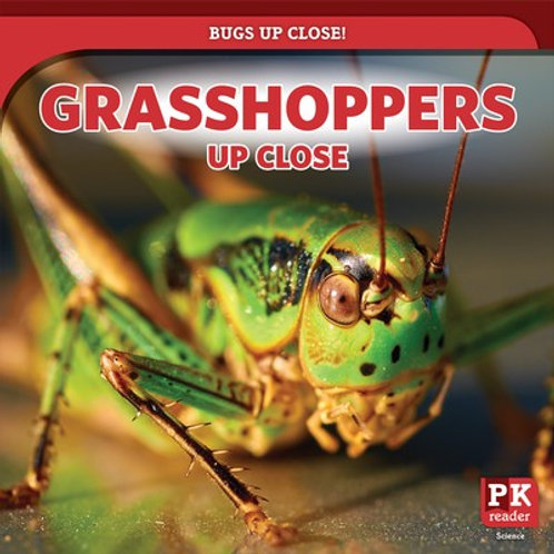 Grasshoppers up close