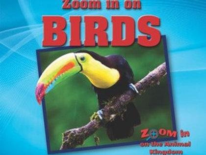 Zoom in on Birds