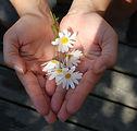 flower-22656_1920.jpg