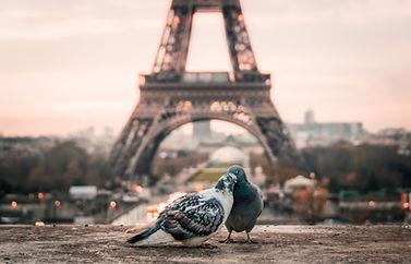 Программа изучения французского языка