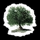 Le-Carre-des-huiles-logo.png