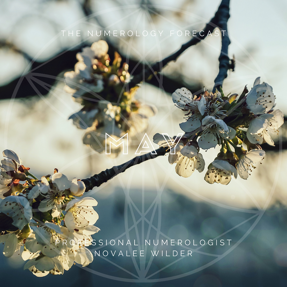 Apple blossoms with the text The Numerology Forecast, May, Professional Numerologist Novalee Wilder