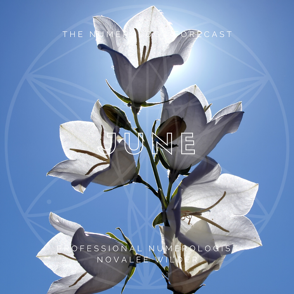 White Bellflowers backlit by the sun and a blue sky. The Numerology Forecast for June 2021 by Professional Numerologist Novalee Wilder