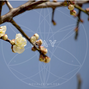 Apple branches with flower buds on them against a blue sky. The Numerology Forecast for May 2019 by Novalee Wilder