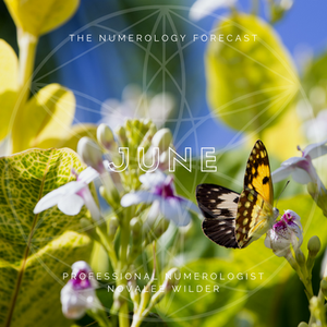 The Numerology Forecast - June 2020 by professional numerologist Novalee Wilder. Phpto depicts a butterfly on a flower in the sun