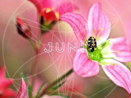 Den Globale Månedsenergi - Juni 2019