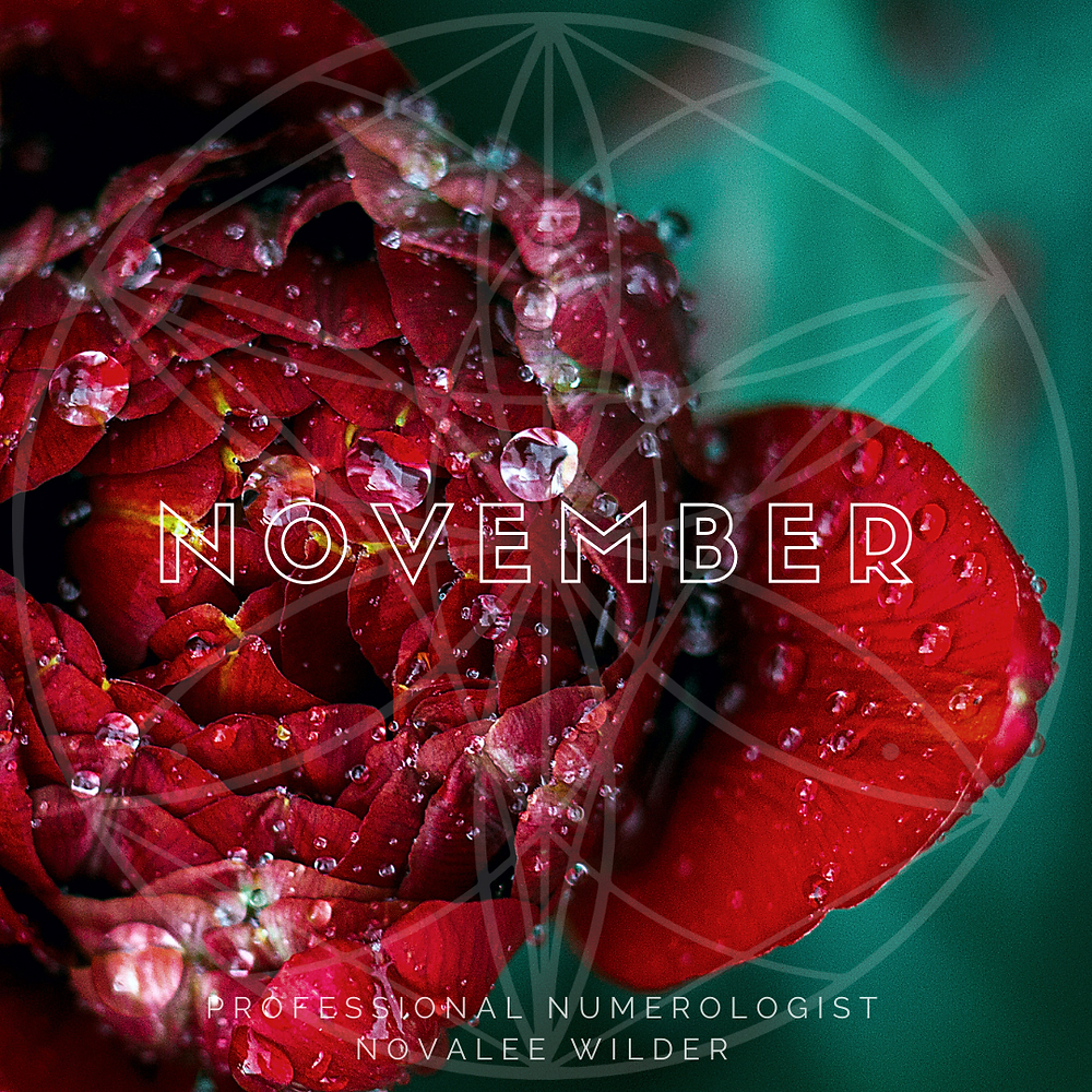 close up of a deep red flower covered with water drops. The word NOVEMBER written across in Capital letters. The Numerology Forecast by Novalee Wilder