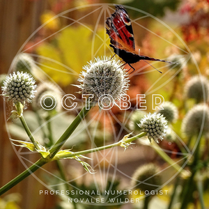 A butterfly perched on top of a flower bud. The word OCTOBER written across in capital letters. The Numerology Forecast by Novalee Wilder