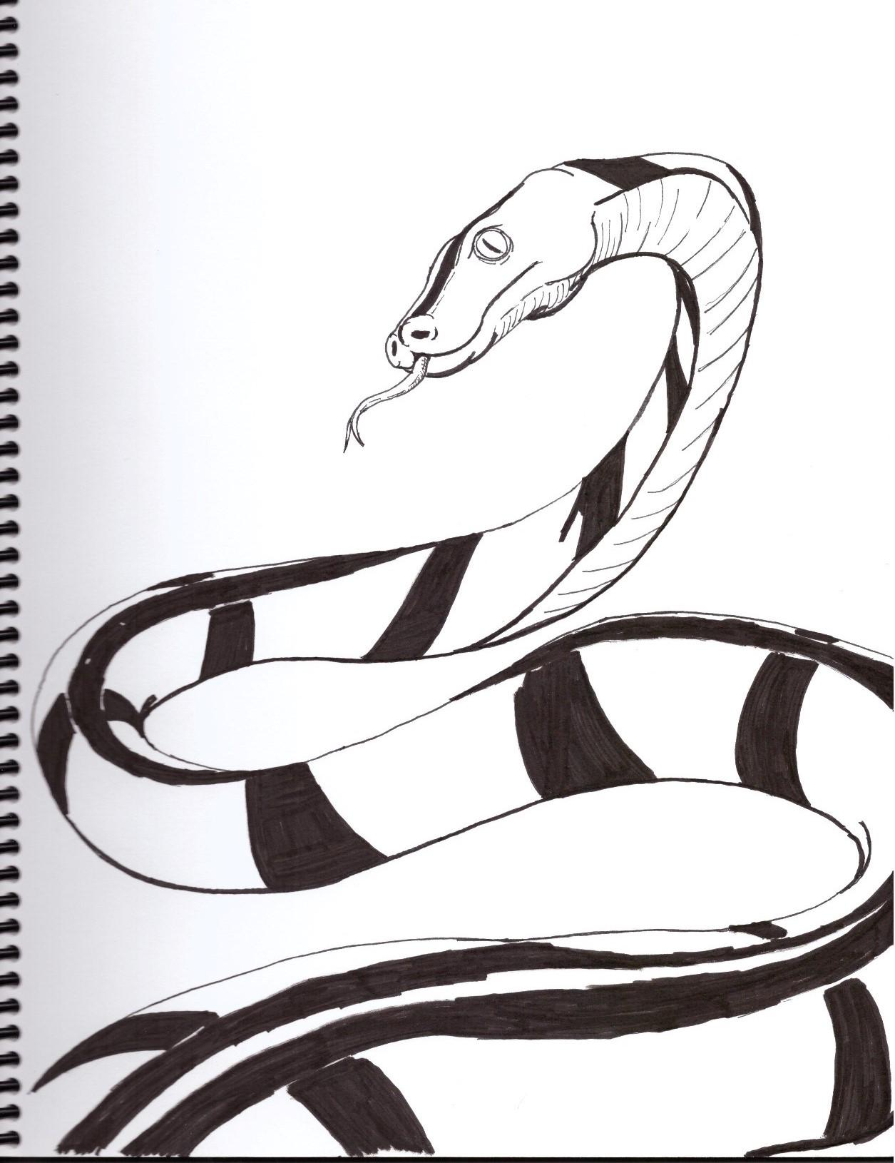 Pythonidae