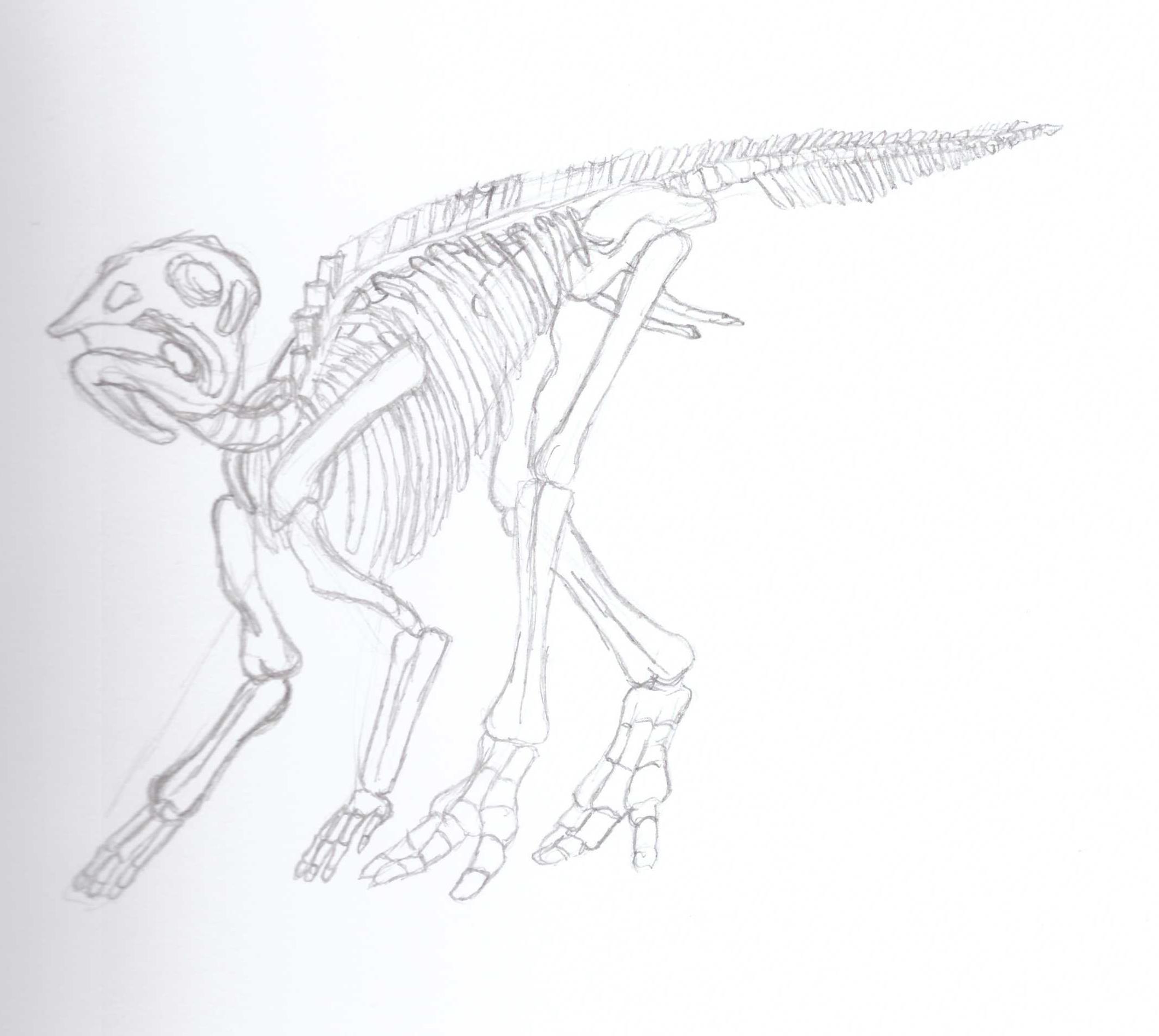 Baby Saurolophus