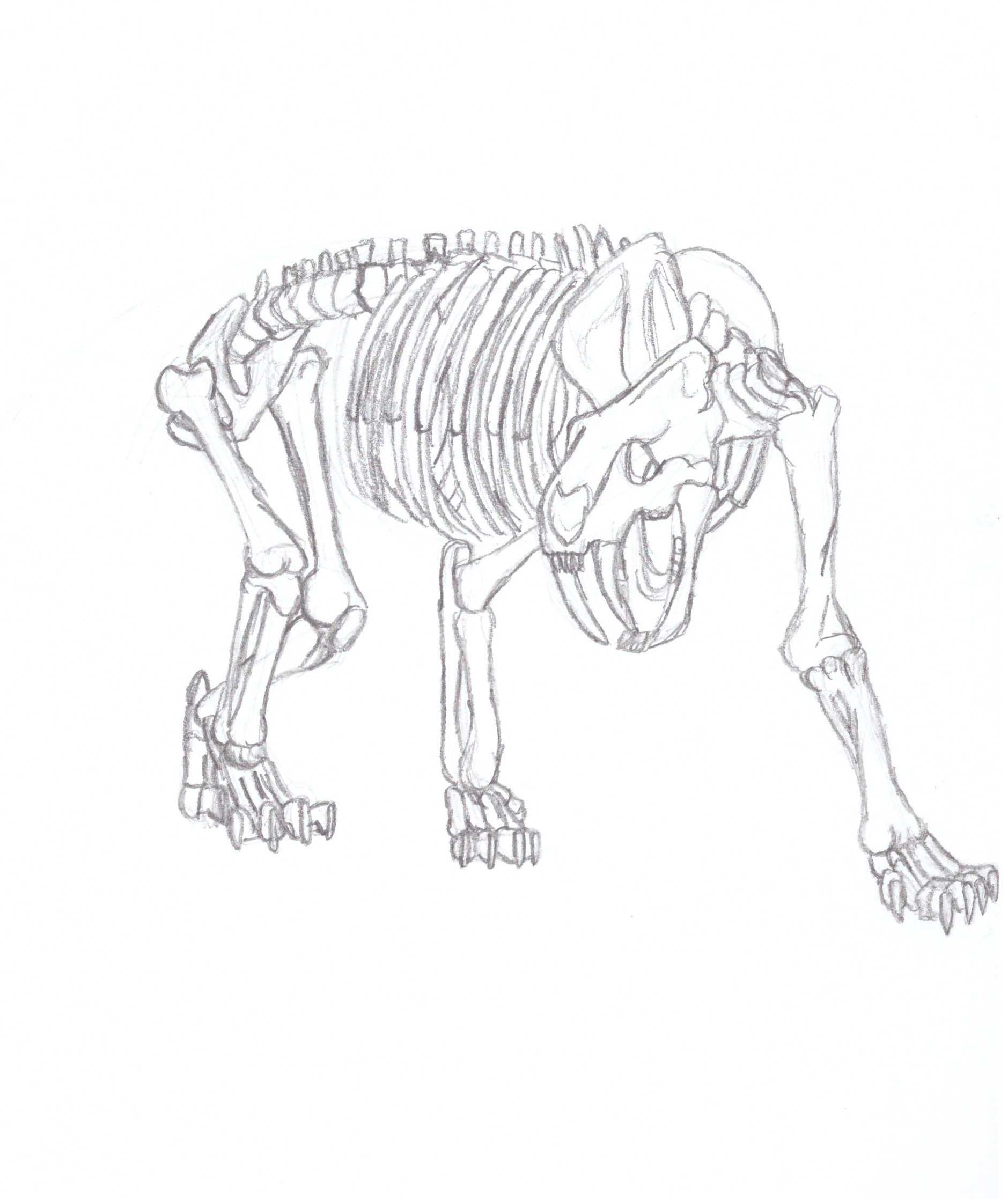 Saber-tooth Tiger