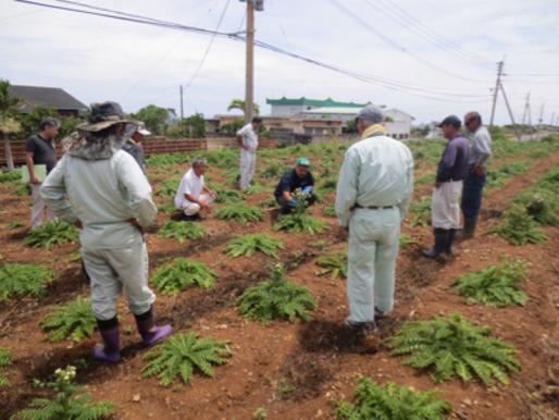 平成30年度高年齢者活躍人材育成事業(農業支援講習会)