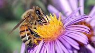 BeeOnFlower.jpg