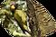 GreenWoodpecker.png