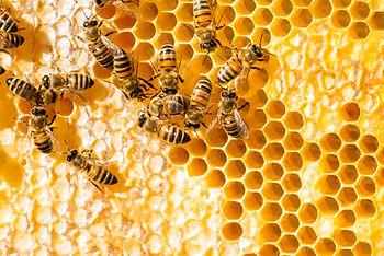 Raw-Honey-or-Honey.jpg