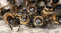 Guard Bees 3.jpg