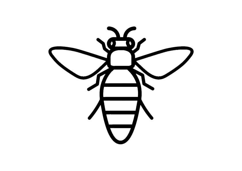 Honeybee 3