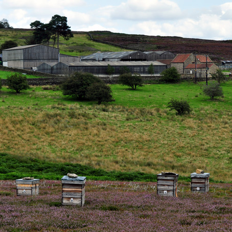 Busy Bees on the Moors!