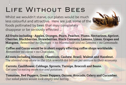 Life WIthout Bees