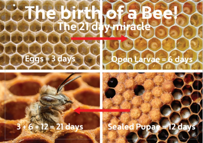 Birth of a Bee